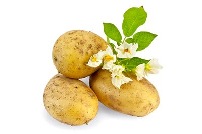 kolme perunaa